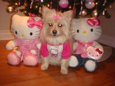 Hello Kitty dog Christmas photo nightmare