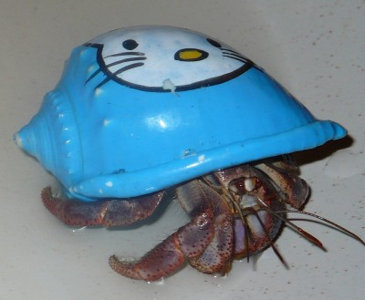 Hermit crab with Hello Kitty shell