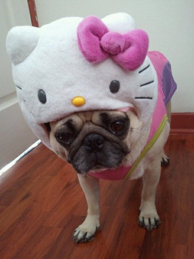 Hello Kitty pug dog